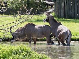 Africké safari Josefa Vágnera se otevírá. Nadále zůstává výhodné vstupné. Foto (c) Simona Jiřičková