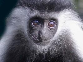 Africké zvíře do každé rodiny. Safari park spouští vánoční adopční kampaň. Foto (c) Safaripark Dvůr Králové