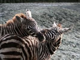 Detektivem v říši zvířat a zajímavosti ze zákulisí ZOO. Foto (c) Simona Valentová