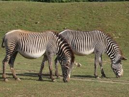 Královédvorská zoo chystá velké investice. Foto (c) Michal Súkup, Dvůr Králové nad Labem