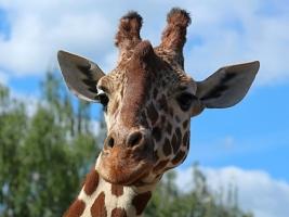 Navýšení limitu pro počet návštěvníků zoo. Foto (c) Michal Súkup