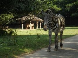 Poslední šance navštívit Africké safari