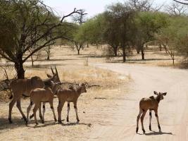 O Velikonocích se návštěvníkům letos poprvé otevřou brány Afrického a Lvího safari. Foto (c) Simona Jiřičková