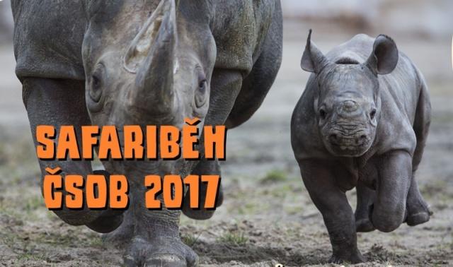 Safariběh ČSOB 2017: Monika Leová poběží v ZOO Dvůr Králové pro nosorožce. Foto (c) ZOO Dvůr Králové