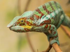 Safaripark Dvůr Králové: Madagaskar plný mláďat. Foto (c) Lukáš Pavlačík