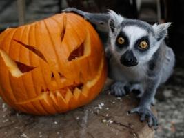 Týden duchů v Safariparku Dvůr Králové začíná 27. října. Foto (c) Simona Jiřičková