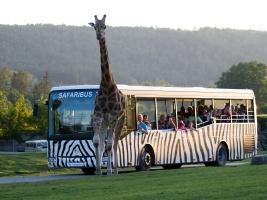 V Evropě unikátní jízda mezi zvířaty. Až do konce srpna vyjedou do Afrického safari každý večer dva Safaribusy. Foto (c) Simona Jiřičková
