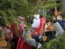 Vánoční zoo ve Dvoře Králové začne 16. prosince. Foto (c) Simona Jiřičková