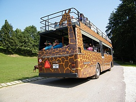 ZOO a Safari Dvůr Králové nad Labem - rozpačitý zážitek