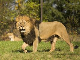 ZOO Dvůr Králové otevře o víkendu Africké safari a zahájí hlavní sezonu. Foto (c) Simona Jiřičková
