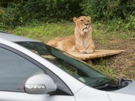ZOO otevře o víkendu Africké safari a zahájí už 70. hlavní sezonu - foto (c) Lukáš Pavlačík