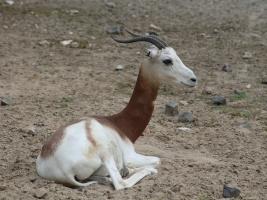 Ztráta safari parku přerostla 30 milionů. Pomáhá ale rekordní podpora příznivců