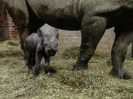 safari-park-dvur-kralove-se-ucastni-nejvetsiho-presunu-nosorozcu-z-evropy-do-afriky