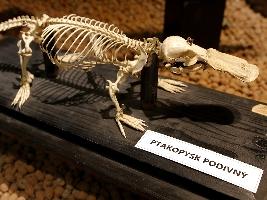 umeni-pod-kuzi-aneb-krasa-kosti-safari-park-dvur-kralove-predstavil-novou-expozici