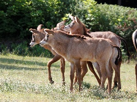 V dvorském safari se to hemží mláďaty