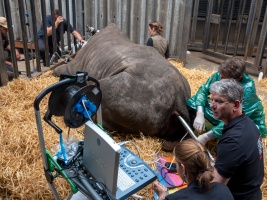v-nemecku-se-povedl-rekordni-odber-vajicek-nosorozcu