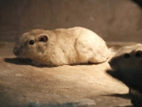 4 nové druhy v Tiebele