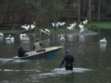 Odchyt pelikánů 2017. Foto (c) Jakub Labský