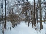 Zamrzlý a zasněžený Hartský potok v parku