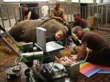 prulom-v-zachrane-nosorozcu-bilych-severnich-v-laboratori-se-podarilo-vyvinout-prvni-hybridni-embryo-nosorozce-4