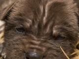 Smečka psů hyenových se znovu rozrostla o jedenácterčata. Foto (c) Lukáš Pavlačík