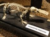 Umění pod kůží aneb krása kosti. Safari Park Dvůr Králové představil novou expozici. Foto (c) Simona Jiřičková