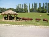 ZOO Safari Dvůr Králové nad Labem